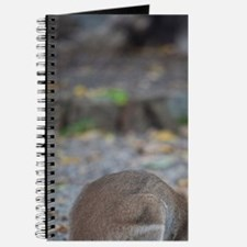 Wallaby eating tasty piece of fruit, Long  Journal