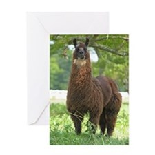 blk_llama_panel Greeting Card
