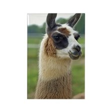 llama2_iphone4s Rectangle Magnet