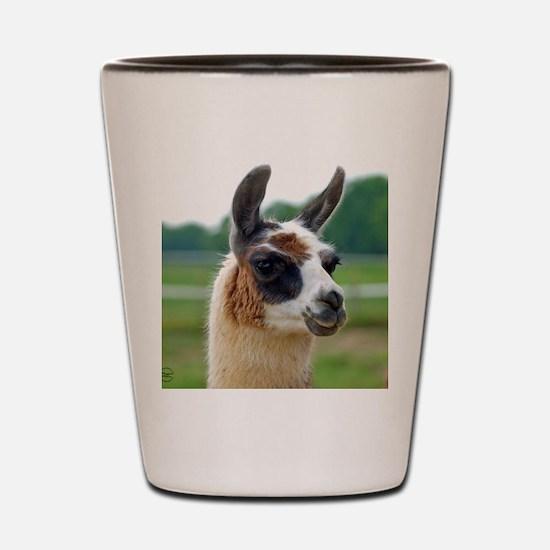 llama2_rnd Shot Glass