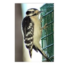 Female Downy Woodpecker Postcards (Package of 8)