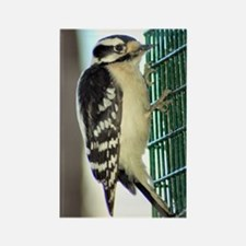 Female Downy Woodpecker Rectangle Magnet