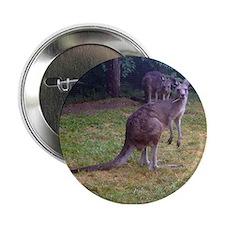grey kangaroo Button