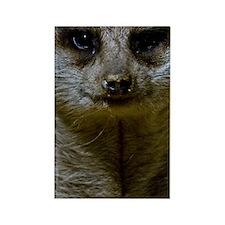 (13) Meerkat  9247 Rectangle Magnet