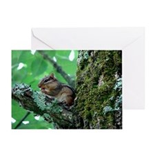 Chipmunk In A Tree Eating Greeting Card