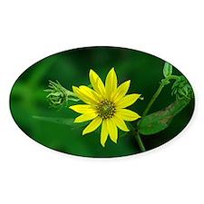 Woodland Sunflower Decal
