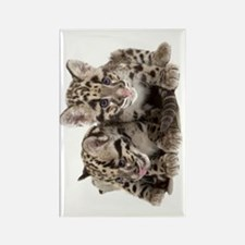 Clouded Leopard Cubs78 Rectangle Magnet
