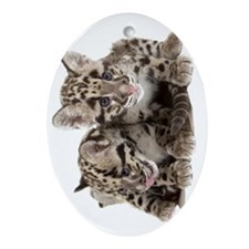 Clouded Leopard Cubs78 Oval Ornament