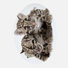 Clouded Leopard Cubs735 Oval Ornament