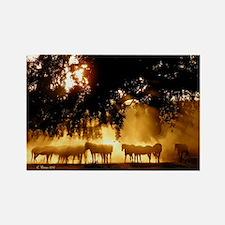 Field Horses signed. Oct. Winner Rectangle Magnet