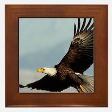 x14  6 Framed Tile