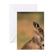 Victoria Eastern grey kangaroo (Macr Greeting Card