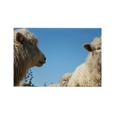 Sheep in Farmyard, Kaikoura, Marl Rectangle Magnet