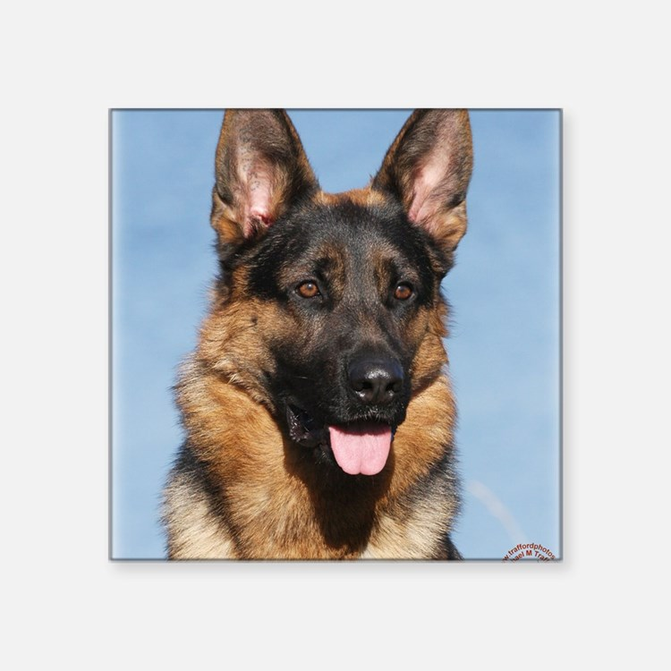 "German Shepherd Dog 9Y554D- Square Sticker 3"" x 3"""