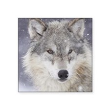 "ms  Wolf Square Sticker 3"" x 3"""