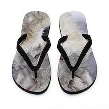 ms  Wolf Flip Flops