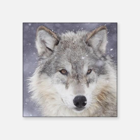 "x10  Wolf Square Sticker 3"" x 3"""