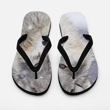 x14  Wolf Flip Flops