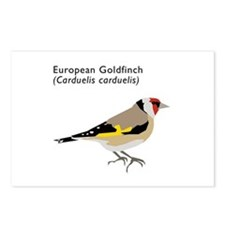 european goldfinch Postcards (Package of 8)