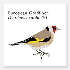 "european goldfinch Square Car Magnet 3"" x 3"""