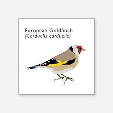 "european goldfinch Square Sticker 3"" x 3"""