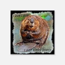 "Beaver 2 bb cp Square Sticker 3"" x 3"""
