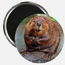 Beaver 2 bb cp Magnet