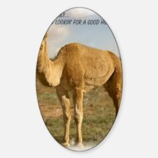 camel 3 cp Decal