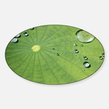 Dew on a Lilypad Decal