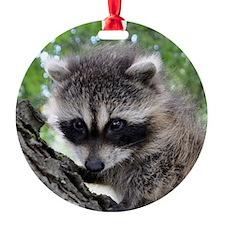 DSC_0058 Ornament