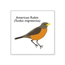 "american robin Square Sticker 3"" x 3"""