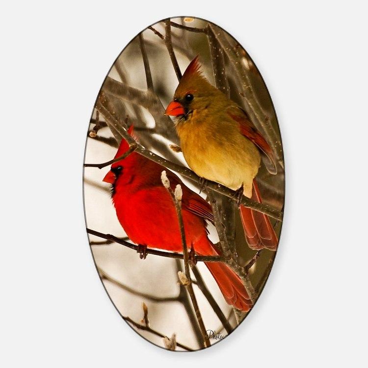 cardinals2poster Sticker (Oval)