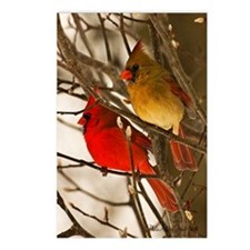 cardinals2poster Postcards (Package of 8)