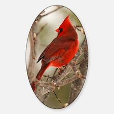 cardinal1pster Sticker (Oval)