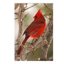 cardinal1pster Postcards (Package of 8)
