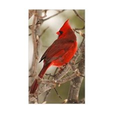 cardinal1pster Decal