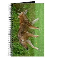 C2.41x4.42a Journal