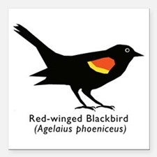 """red-winged blackbird Square Car Magnet 3"""" x 3"""""""