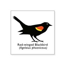 "red-winged blackbird Square Sticker 3"" x 3"""