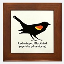 red-winged blackbird Framed Tile