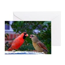 LoveBirdsMP Greeting Card
