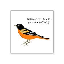 """baltimore oriole Square Sticker 3"""" x 3"""""""