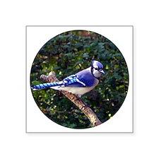 "bluejayCir Square Sticker 3"" x 3"""