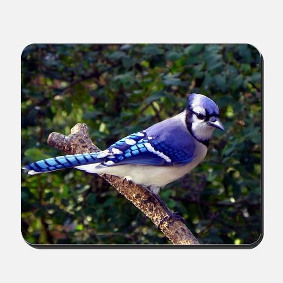 bluejayPil Mousepad