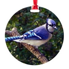 bluejayMP Ornament