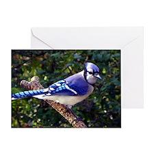 bluejayMP Greeting Card
