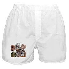 big cats Boxer Shorts