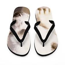 ms Polar Flip Flops
