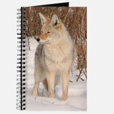 ms  Coyote 048 Journal