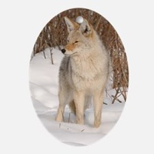 x14  Coyote 048 Oval Ornament